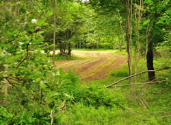 Food Plot Management