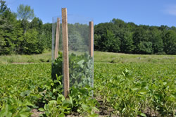 Food Plot Management - Soybeans